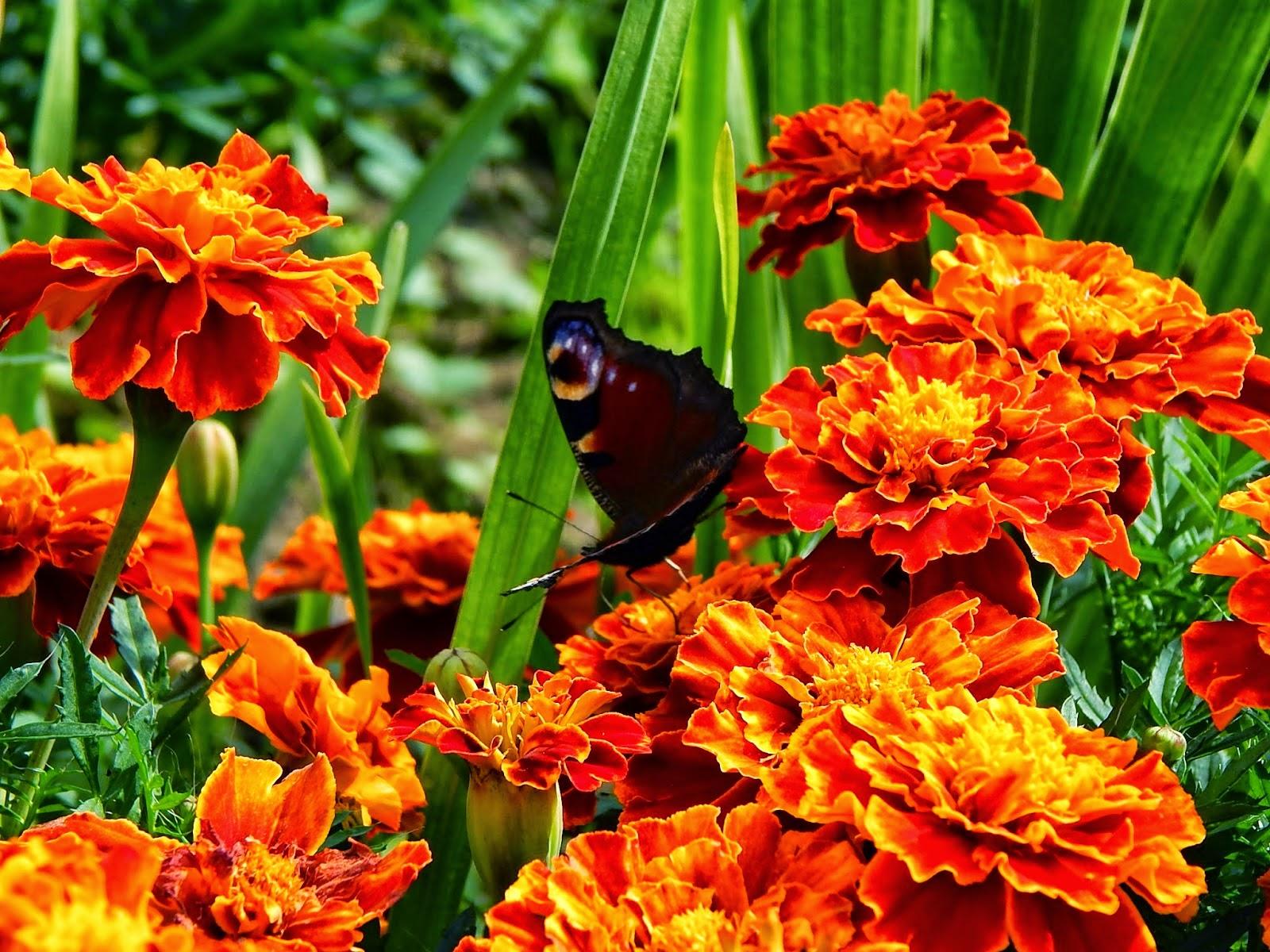 ~48 Wrześniowe motyle.
