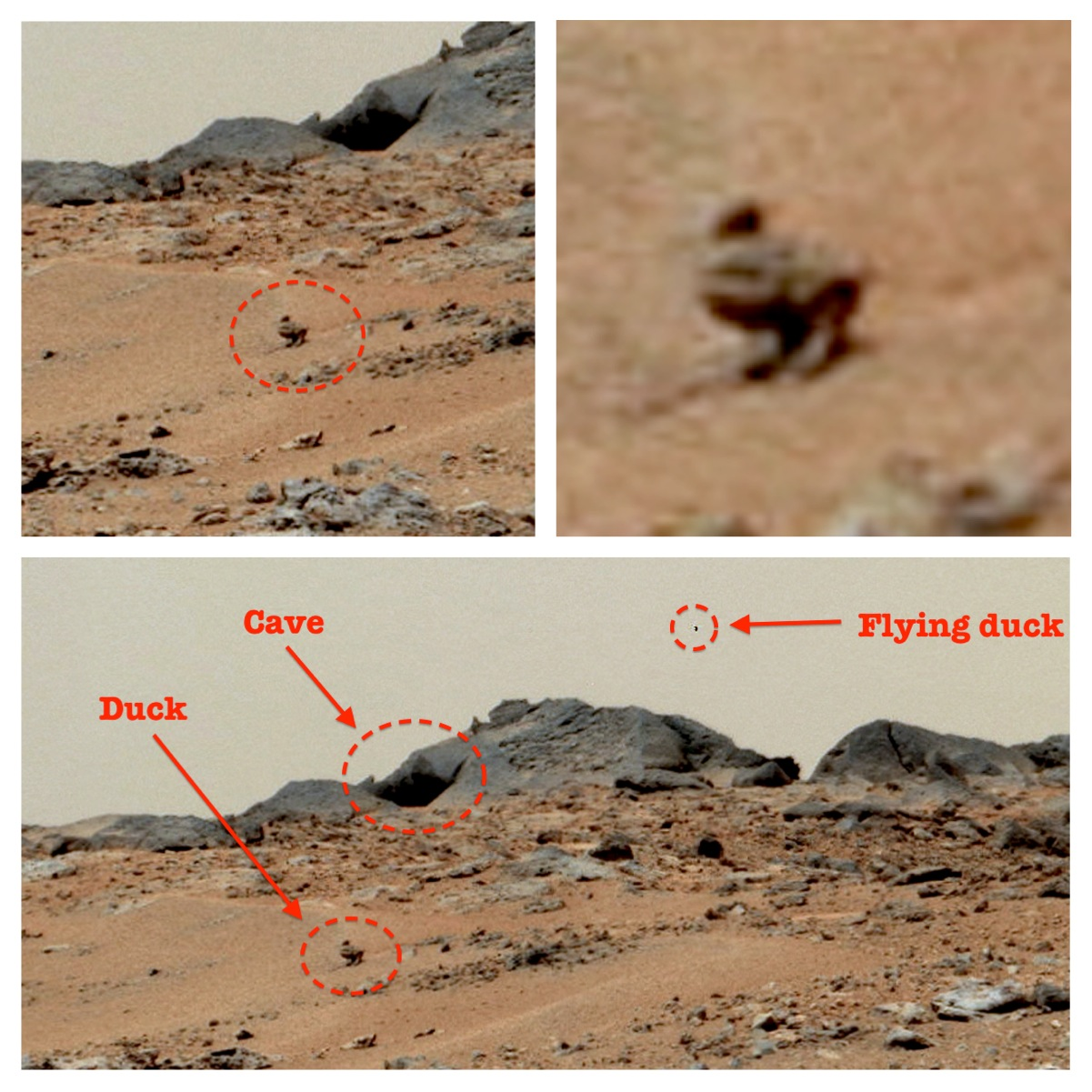 mars rover creature - photo #9