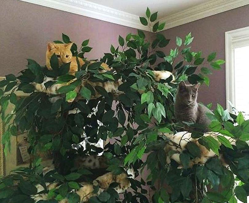 Sturdy Cat Furniture