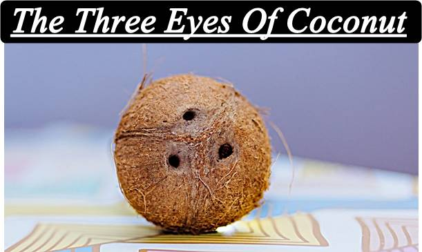 The-Three-Eyes-Of-Coconut