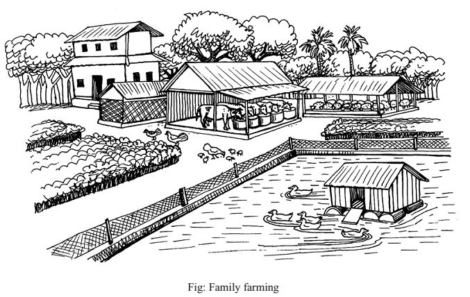 Tips for Agriculture: What are the Importance of Family