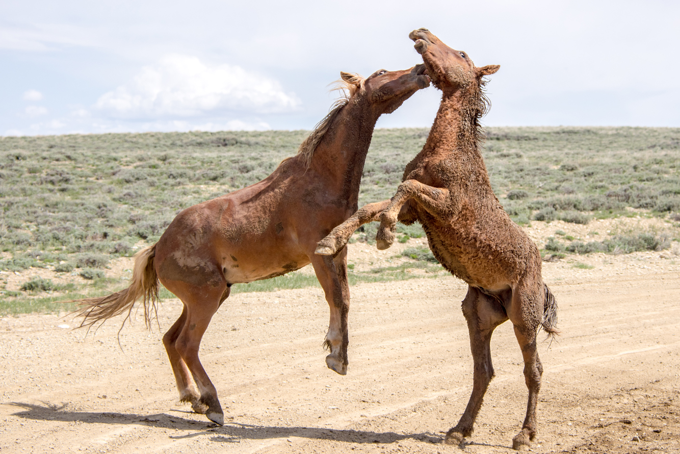 Wyoming: Pilot Butte Wild Horse Tour