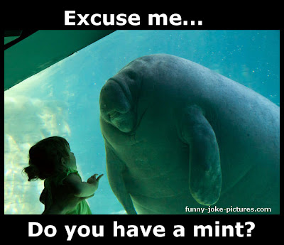 Aquarium Manatee Meets Little Girl Meme Picture