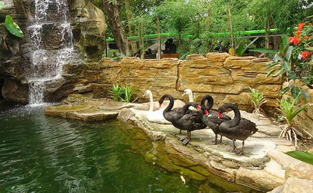 Wisata kebun binatang gembira di jogja