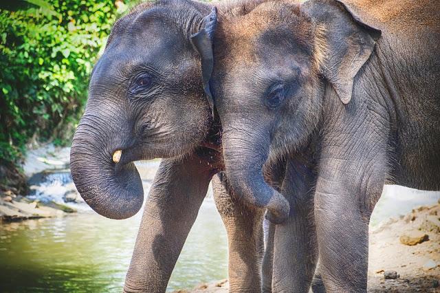 【泰國】初遊清邁必去景點,週六夜市、帕邢寺、夜間動物園,契迪隆寺! 13