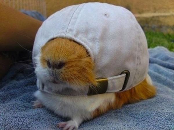 Chùm ảnh về 20 chú chuột Hamster dễ thương nhất thế giới