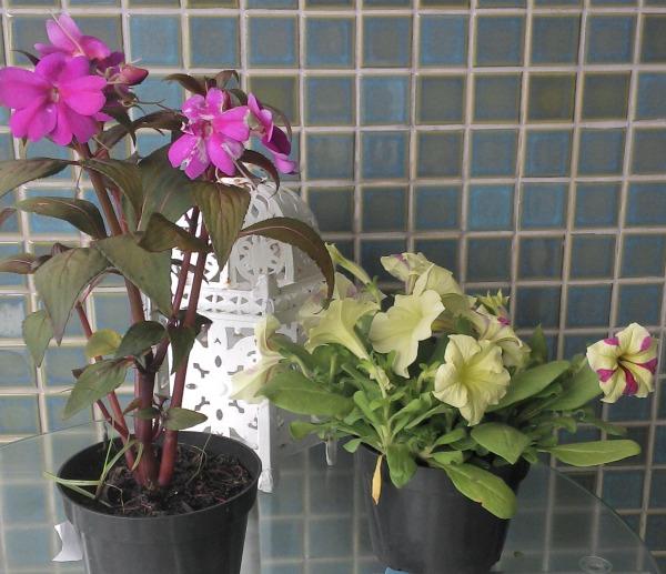 Mercado das Flores no Cais de Santa Rita