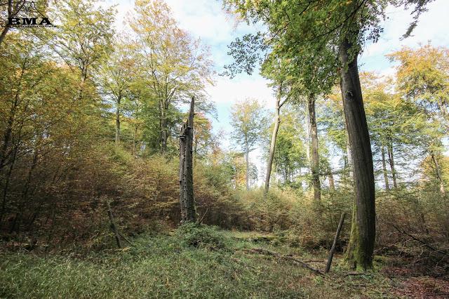 wandern köppel - premiumwanderung westerwald - Traumpfad Köppel - outdoor blog BMA - Best mountain artists wanderungen und Tourentipps