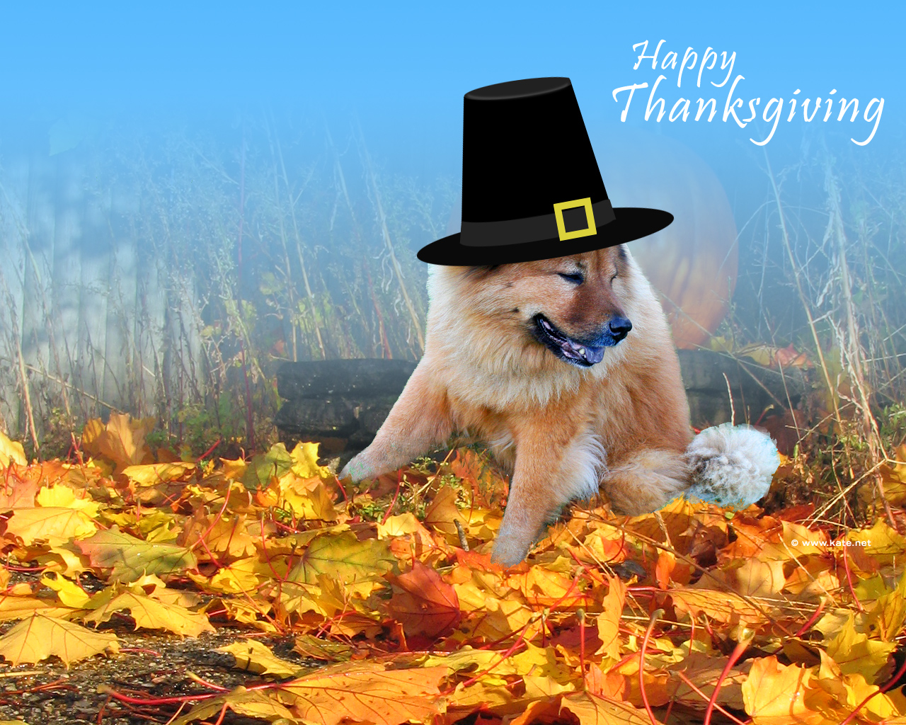 Free download 2012 thanksgiving day wallpapers part 1 - Wallpaper desktop thanksgiving ...