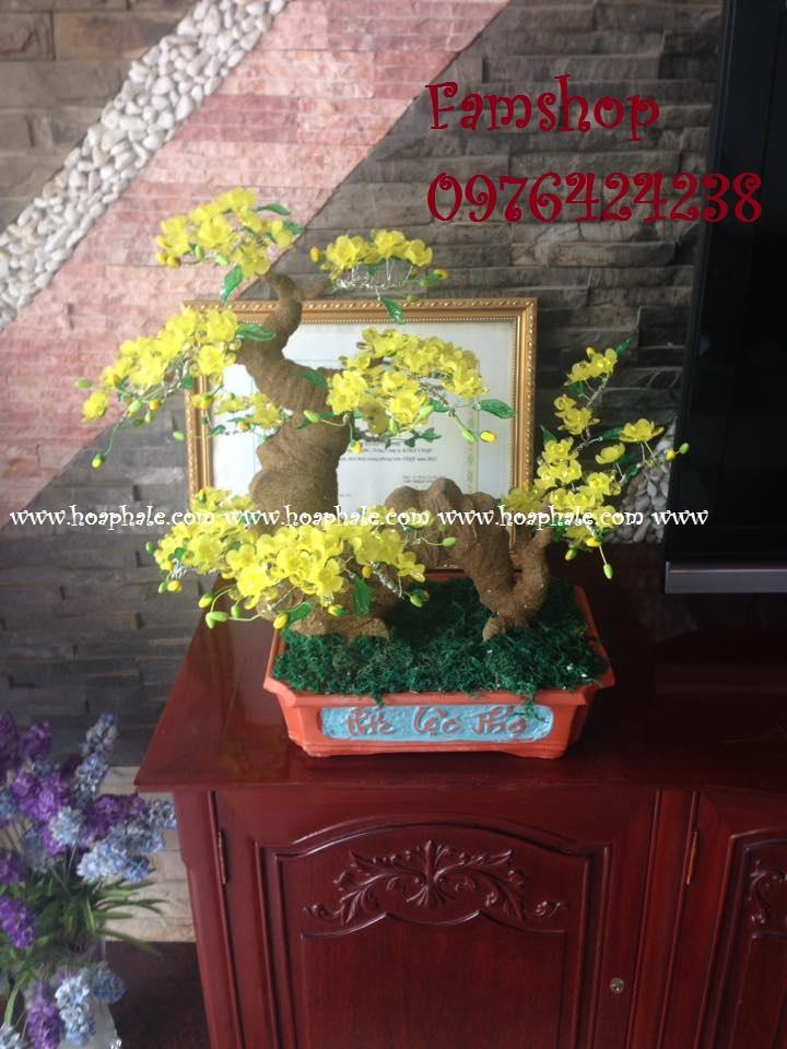 Goc bonsai cay hoa mai tai Ton That Thuyet