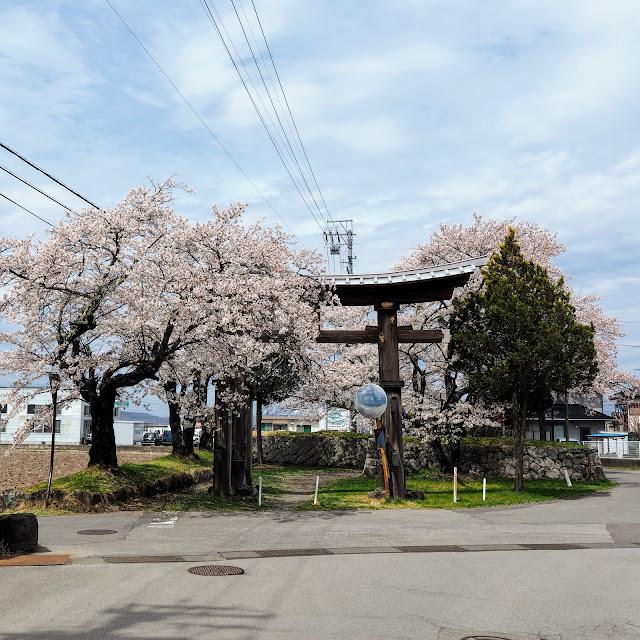 龍岡城 枡形 鳥居 桜
