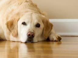 Wellness Core Hypoallergenic Dog Food