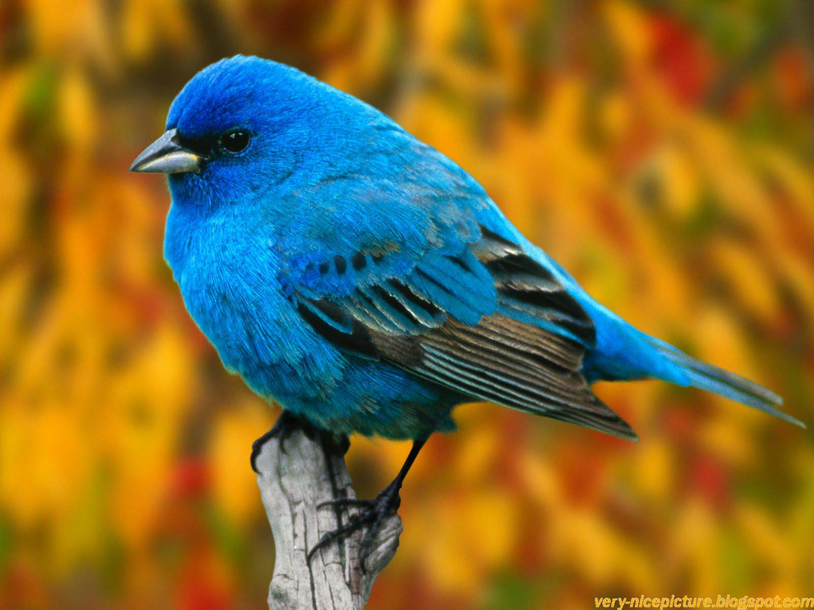Nice wallpapers birds wallpapers natural wallpapers - Hd pics of nature with birds ...