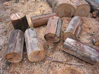 杉の丸太材