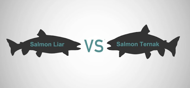 Salmon Liar VS Salmon Ternak
