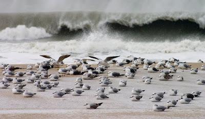 варна черно море южен плаж
