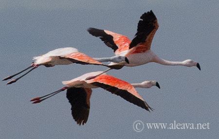 Flamencos en Isla de los pájaros