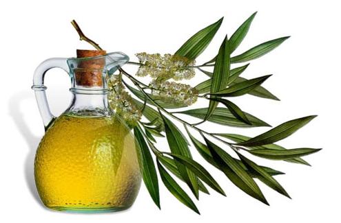 minyak tea tree