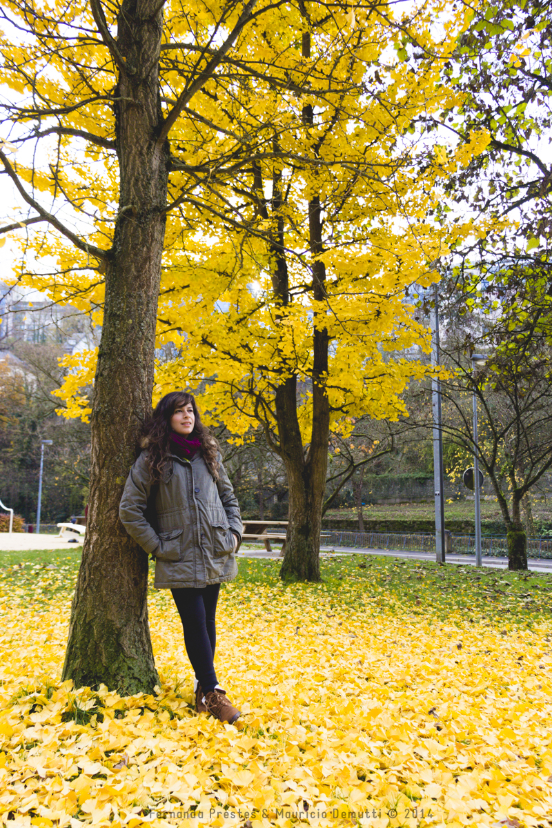 Yellow tree autumn Luxembourg