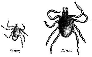 как погонять паразитов в организме