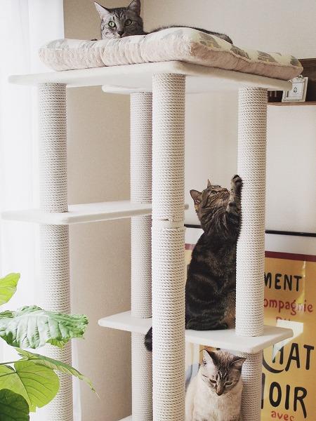 ペッツデポタウンオリジナルのキャットタワー「シュガーキューブ」と我が家の3匹の猫たち