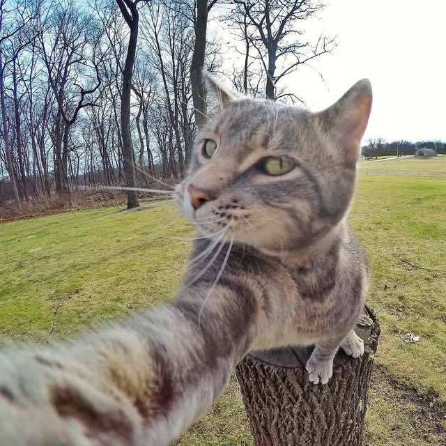 Animals, Amazing photos of a Smart cats