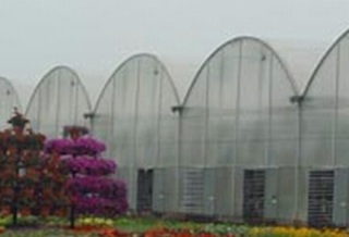 Hydroponic Green Houses