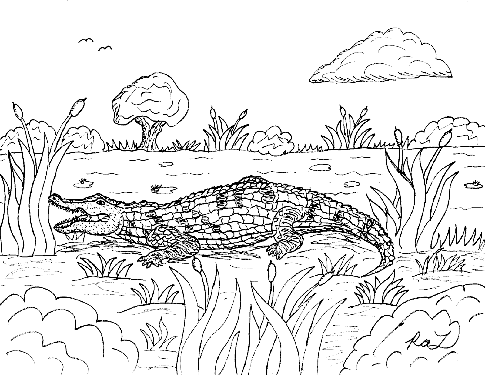 Robin S Great Coloring Pages American Alligator And