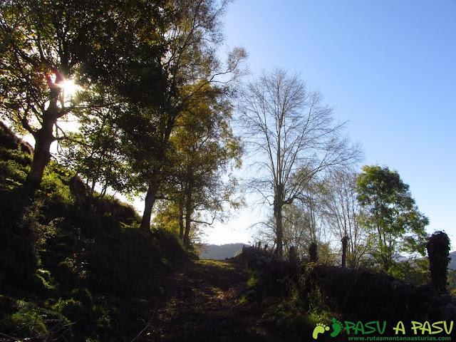 Camino en la ruta del Bosque de Cea