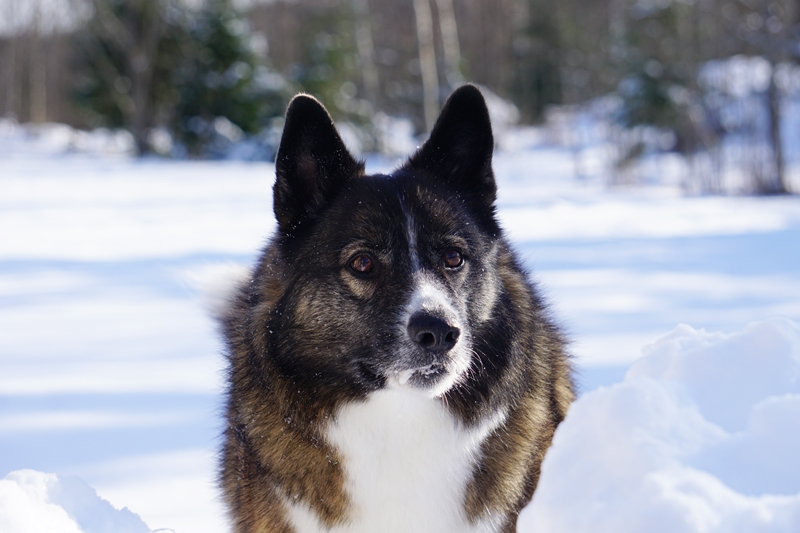 tarmo, koira, talvi