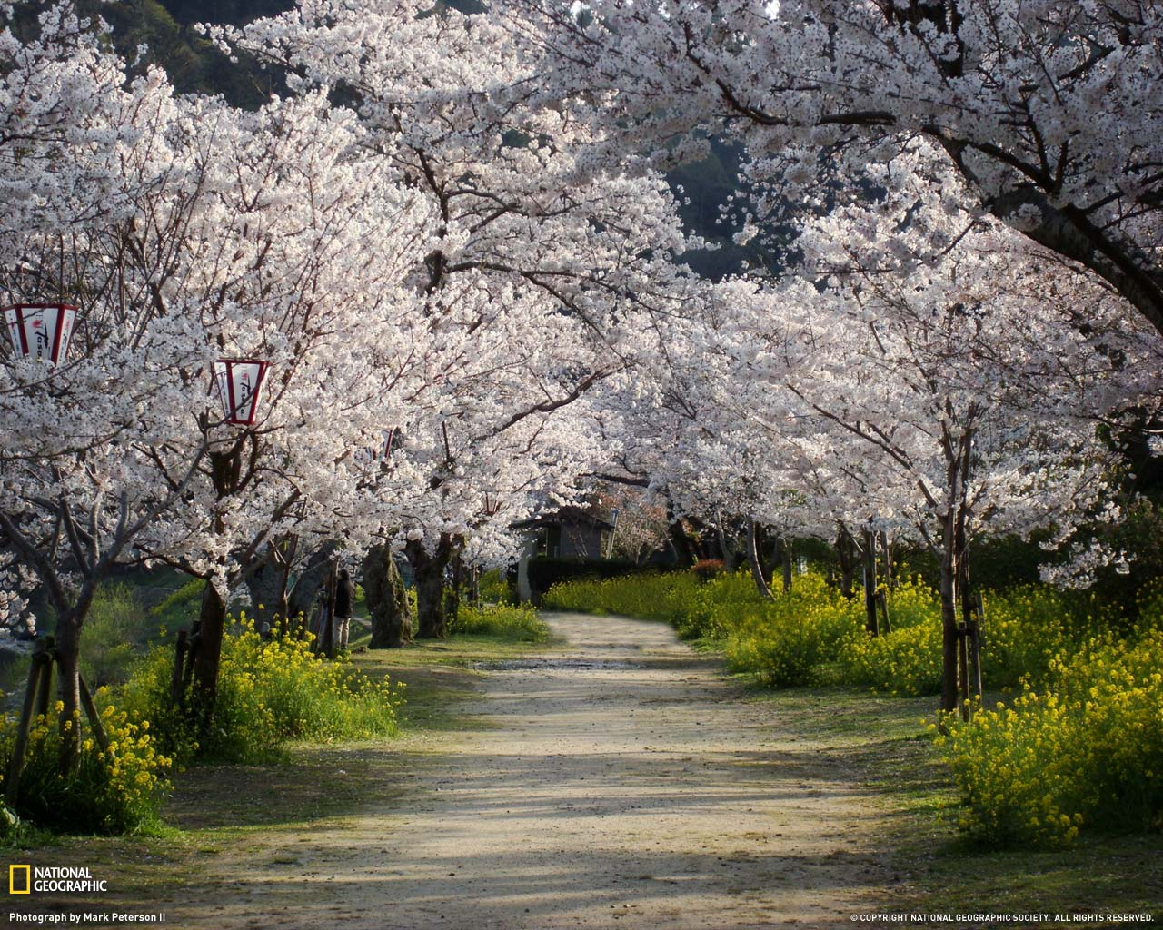 Best photos 2 share breathtaking national geographic - Nature japan wallpaper ...