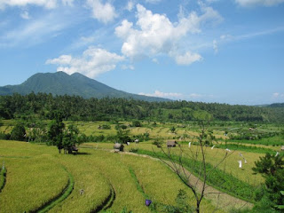 Holidays in Bali: See the beautiful mountains and rice fields in Bali