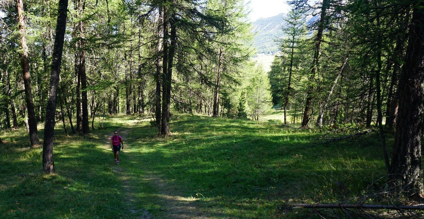Trail in Bois de Laver near Vars
