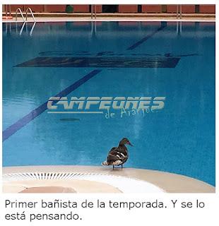 Piscinas Madrid Precios 2018