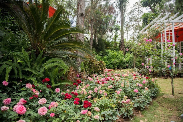 """Kingdom of roses"" in Flamingo Dai Lai Resort 1"