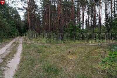 Налибокская пуща. Лесной перекресток у Заборья