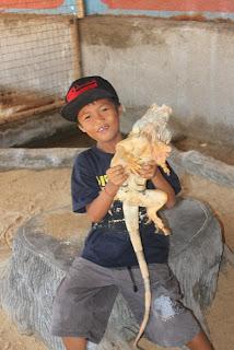 binatang iguana di pulau penyu