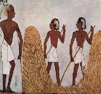 Trabajo-agrícola