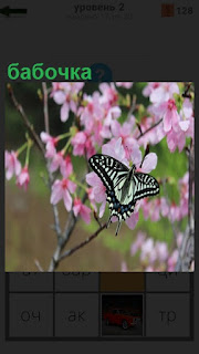 разноцветная бабочка приземлилась на цветок сверху