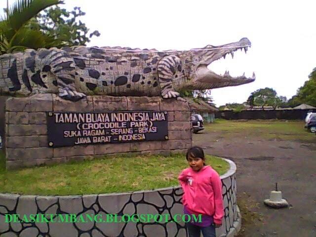 Atraksi Debus Taman Buaya Indonesia Jaya Bekasi