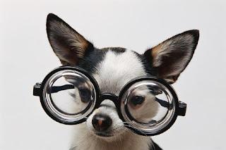 quimico cão rir lol email divertido