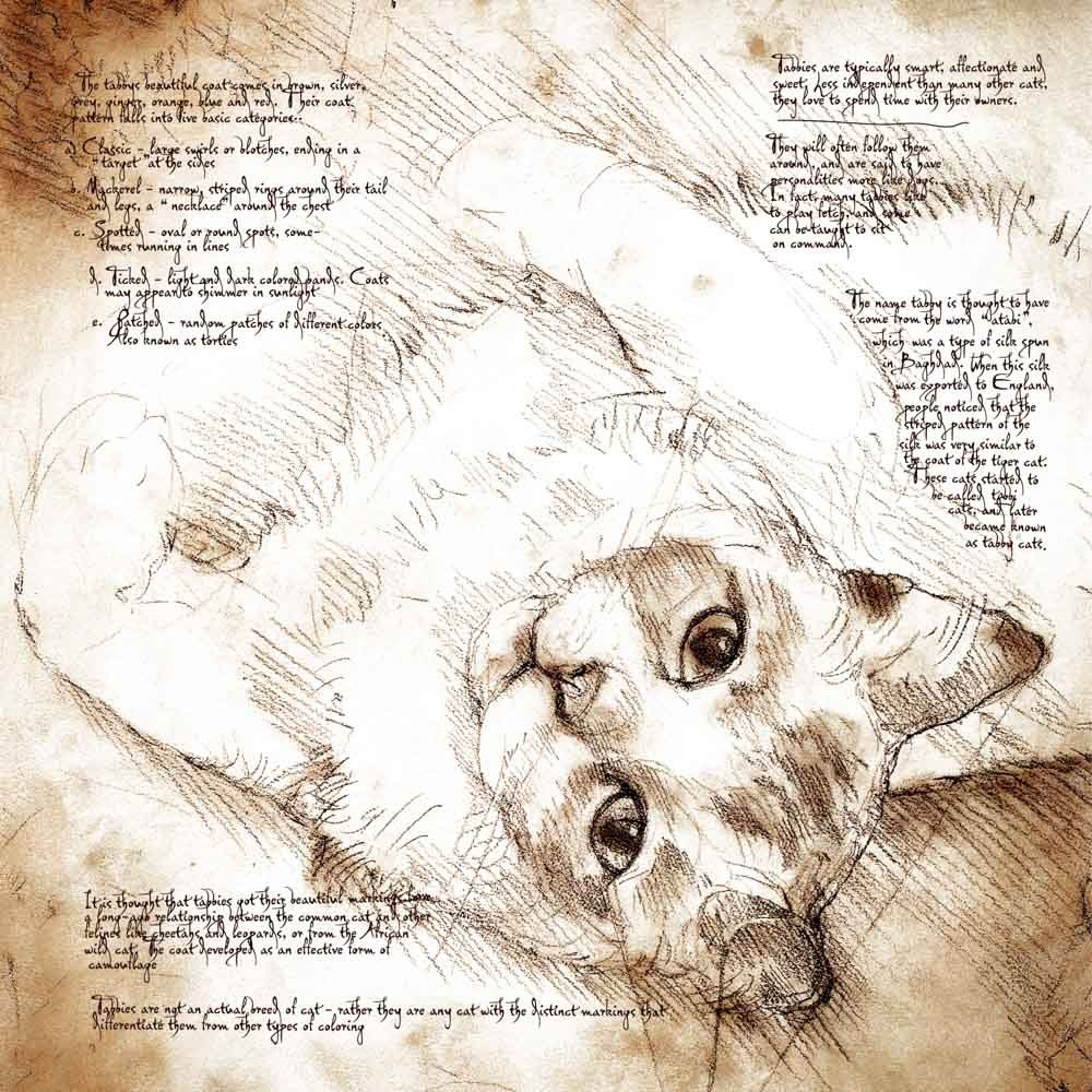 17-Tabby-Cat-Study-Leonardo-s-Dogs-Cats-and-Dogs-Drawn-in-the-style-of-Leonardo-da-Vinci
