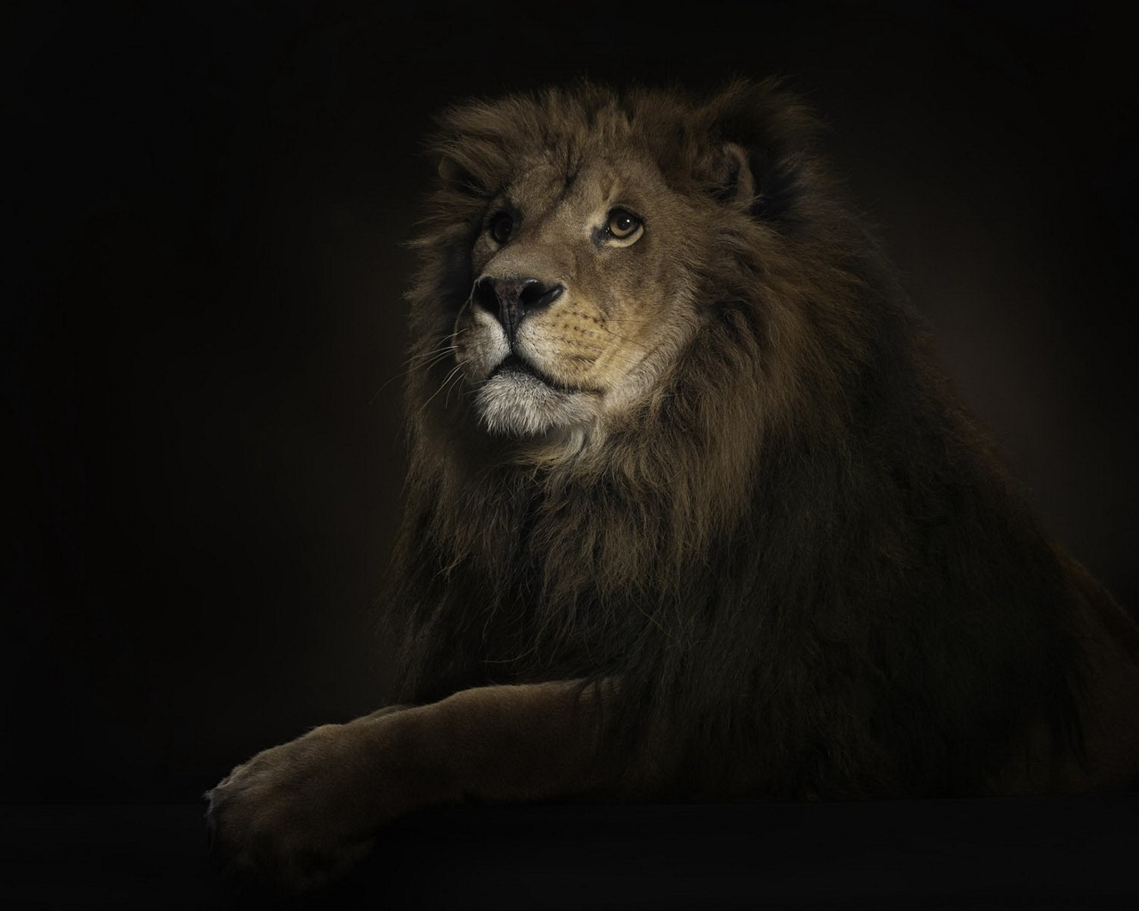 amazing animals wallpapers most worlds awesome animal lion hd nature angry wallpapersafari earth looking