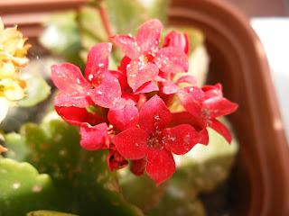 El Huerto De Ramon Flores De Plantas Ornamentales
