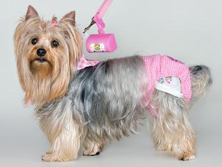 http://acasadaspatas.com.br/73-fralda-para-cachorro-e-calcinhas
