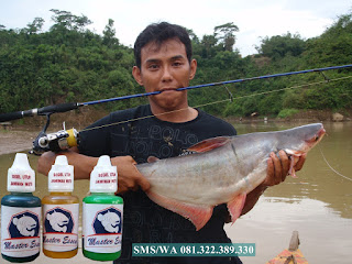 Essen Untuk Umpan Ikan Patin Harian