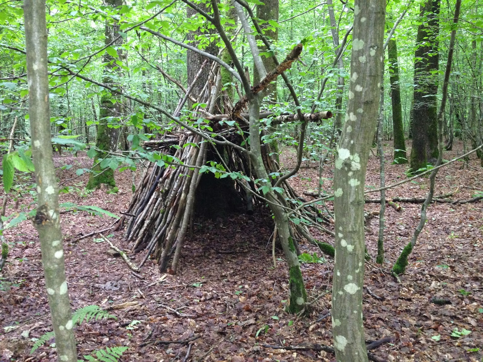 cabane en bois foret great fond dcran fort fentre btiment abandonn branche chalet rural biens. Black Bedroom Furniture Sets. Home Design Ideas