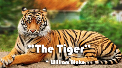 critical appreciation of the tiger of william blake Let's begin interpreting william blake's poetry with an analysis of the lamb by william blake included is a link to it's companion poem the tyger, as well as analysis of the chimney sweeper, another poem from songs of innocence.