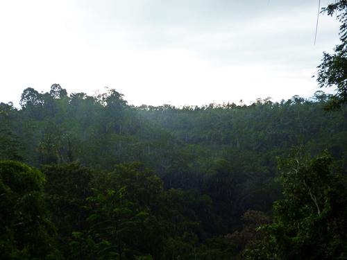 こういう雨が豊かな緑を作りコーヒーが育つんですね
