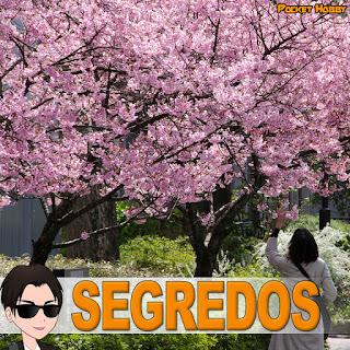 Os Segredos de quem mora no Japão - Pocket Hobby - www.pockethobby.com - 01